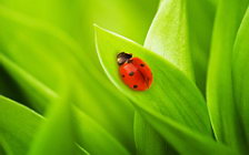 Ladybird wide wallpapers and HD wallpapers
